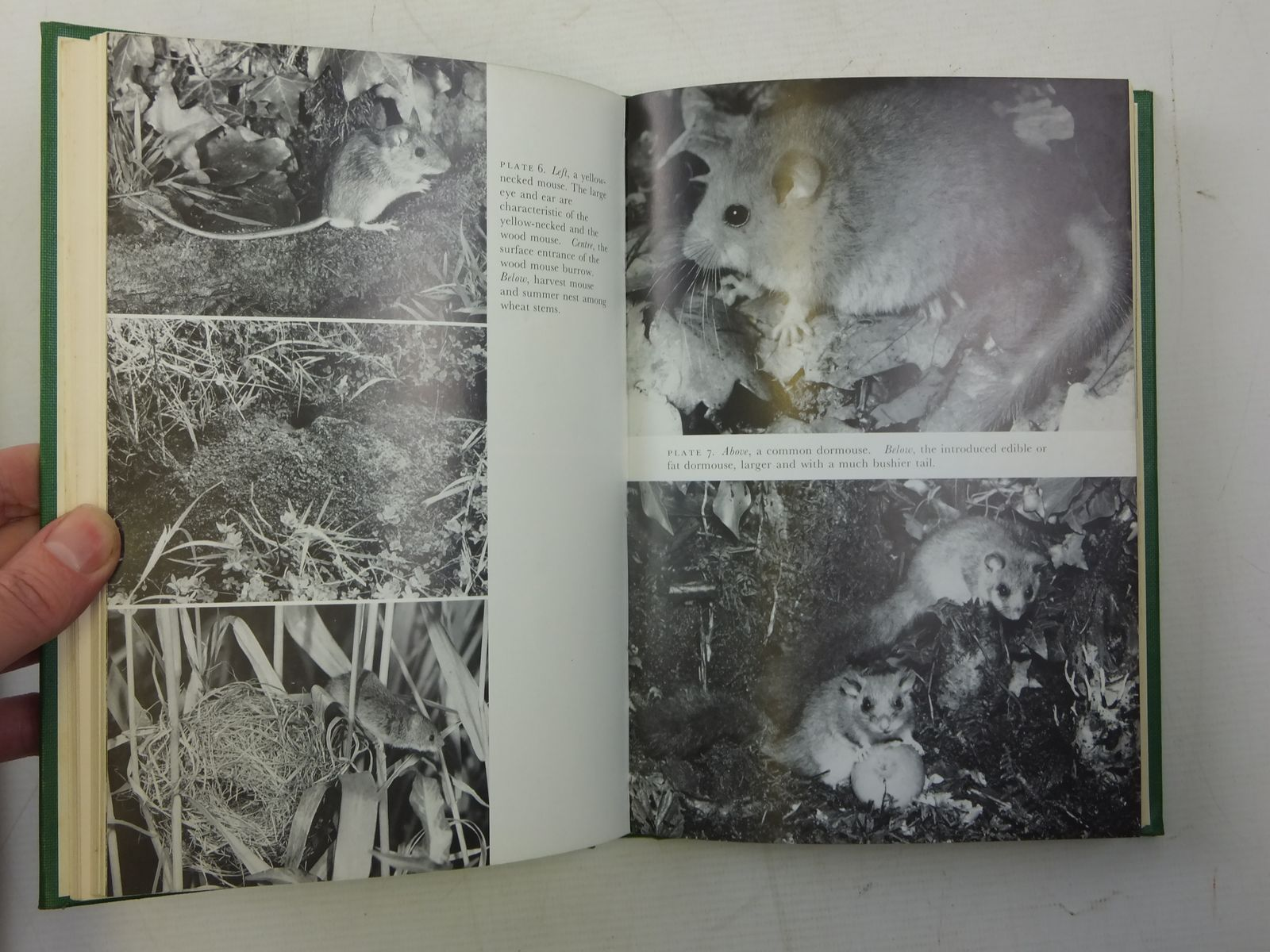 Photo of MAMMALS IN THE BRITISH ISLES (NN 68) written by Matthews, L. Harrison published by Collins (STOCK CODE: 2116222)  for sale by Stella & Rose's Books