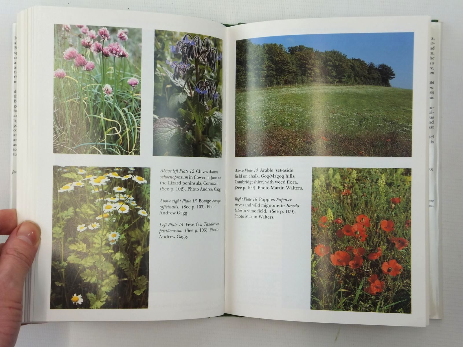 Photo of WILD & GARDEN PLANTS (NN 80) written by Walters, Max published by Collins (STOCK CODE: 2123835)  for sale by Stella & Rose's Books