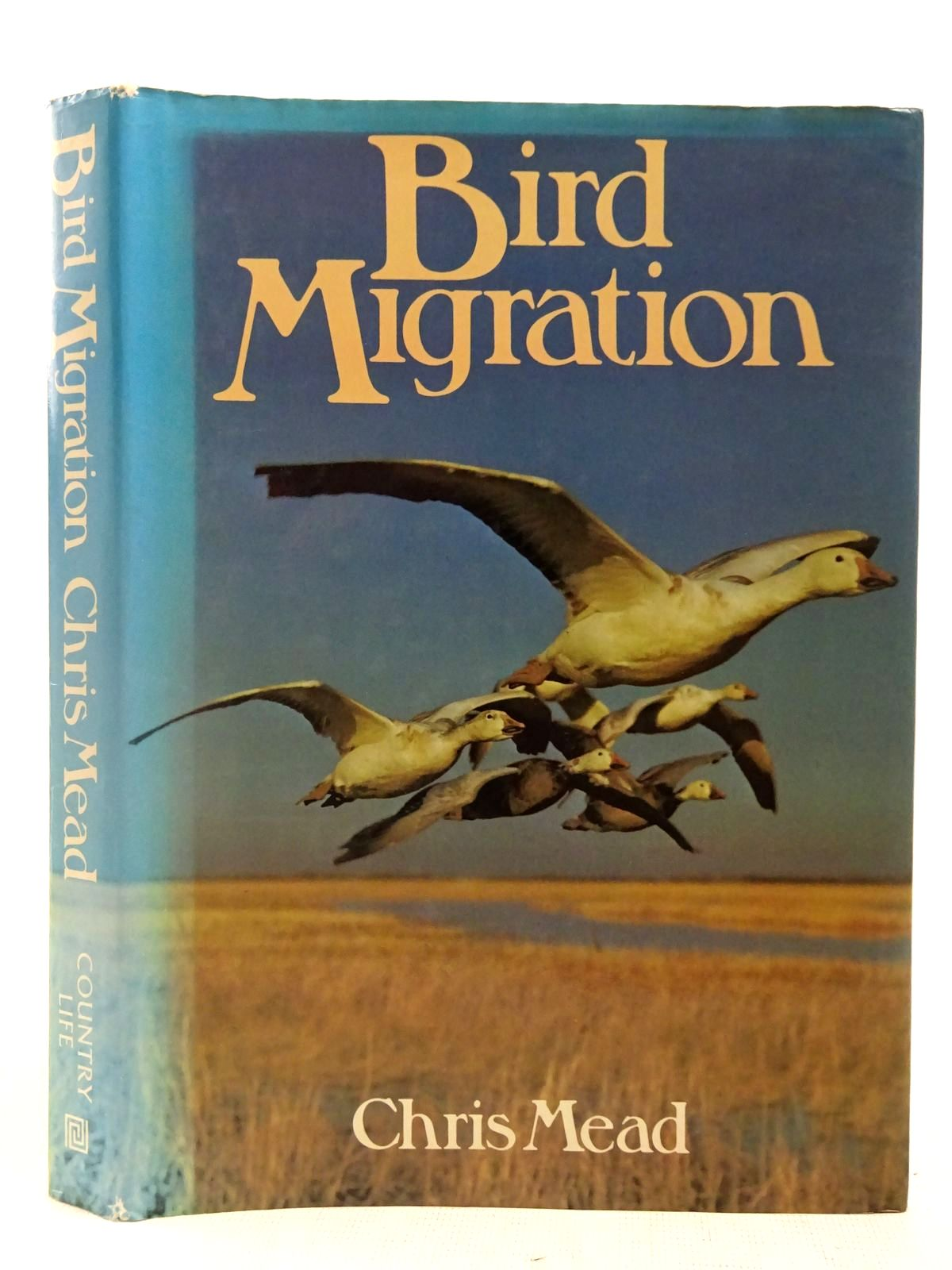 Photo of BIRD MIGRATION- Stock Number: 2127532