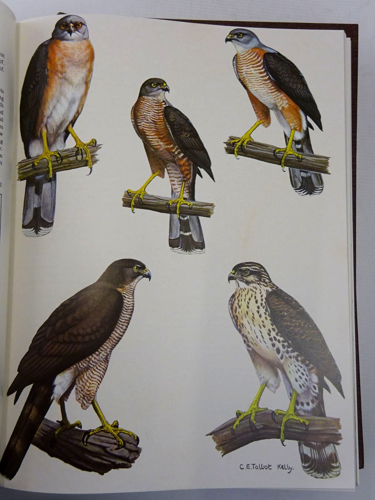 Photo of EAGLES, HAWKS AND FALCONS OF THE WORLD written by Brown, Leslie H. Amadon, Dean illustrated by Peterson, Roger Tory et al.,  published by Country Life (STOCK CODE: 2127688)  for sale by Stella & Rose's Books