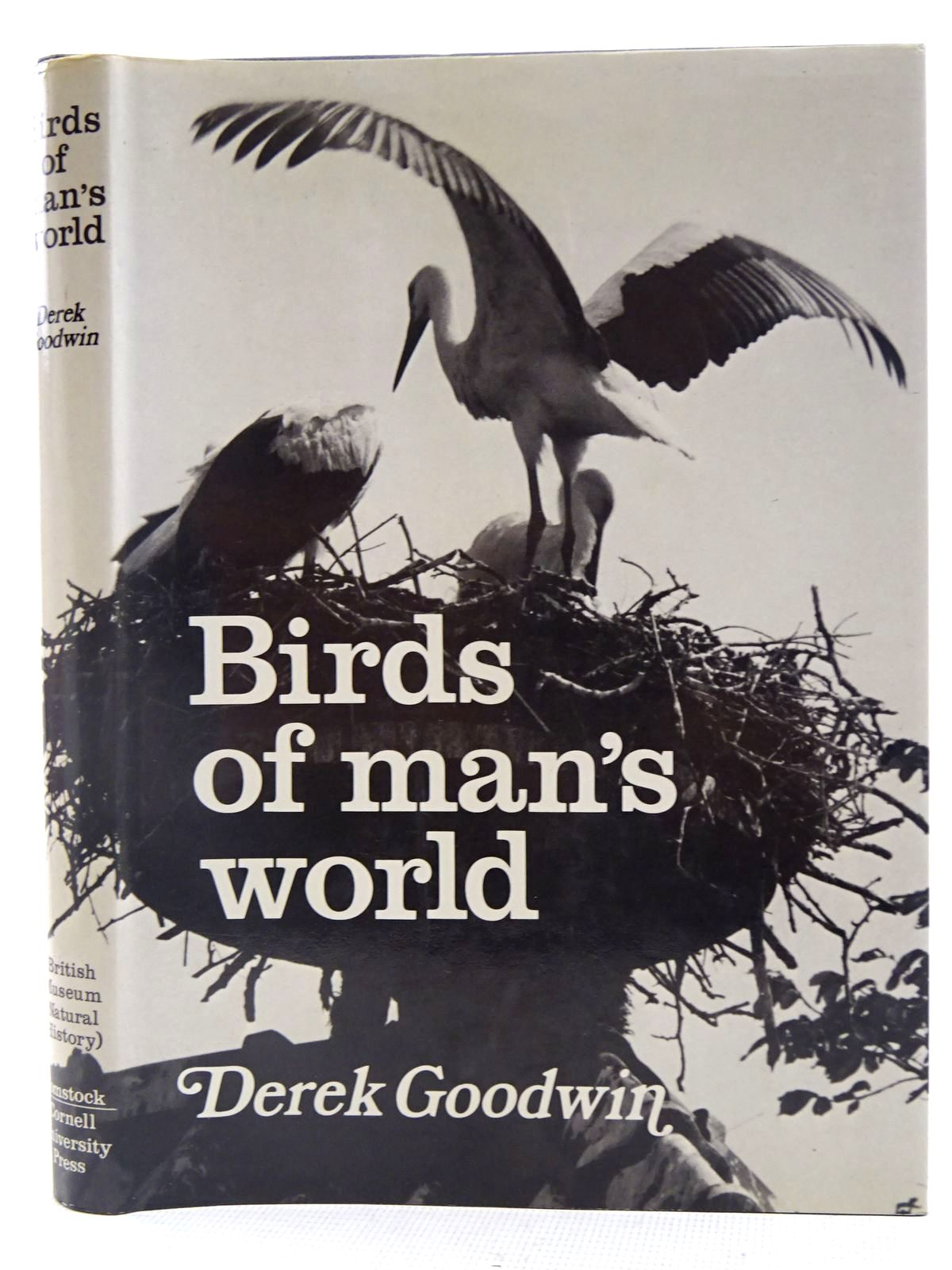 Photo of BIRDS OF MAN'S WORLD- Stock Number: 2128274