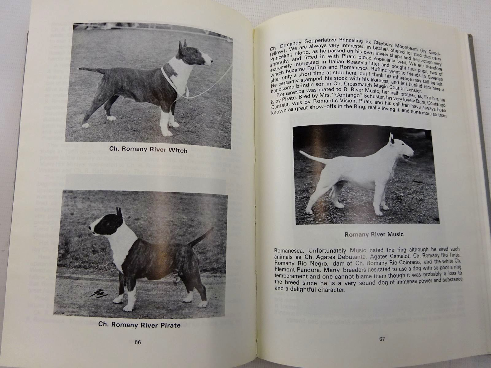Photo of THE FOURTH BULL TERRIER BOOK written by Sweeten, Margaret O.<br />et al, published by The Bull Terrier Club (STOCK CODE: 2128419)  for sale by Stella & Rose's Books