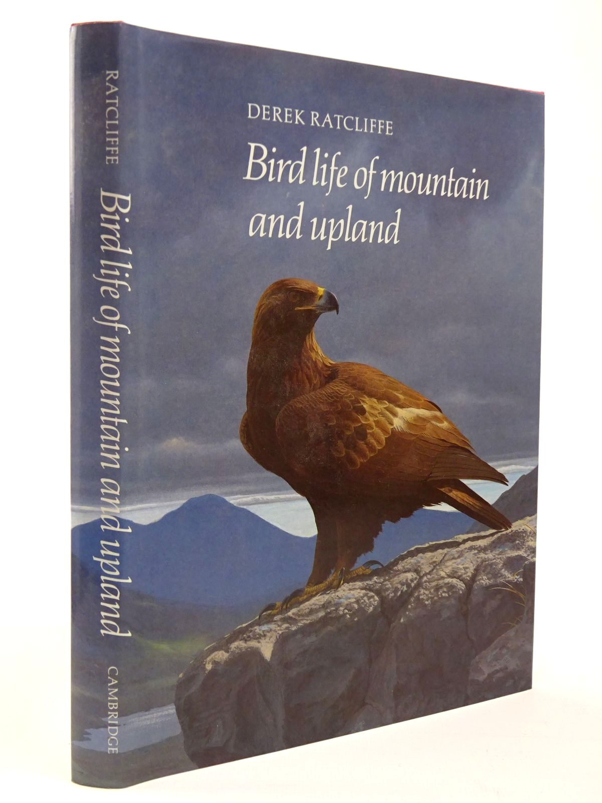 Photo of BIRD LIFE OF MOUNTAIN AND UPLAND- Stock Number: 2129812