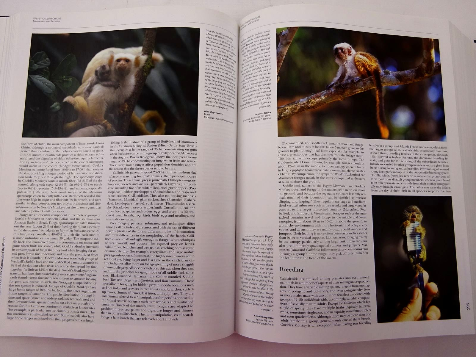 Photo of HANDBOOK OF THE MAMMALS OF THE WORLD 3. PRIMATES written by Wilson, Don E. Mittermeier, Russell A. Bennett, Elizabeth et al, published by Lynx Edicions (STOCK CODE: 2130638)  for sale by Stella & Rose's Books