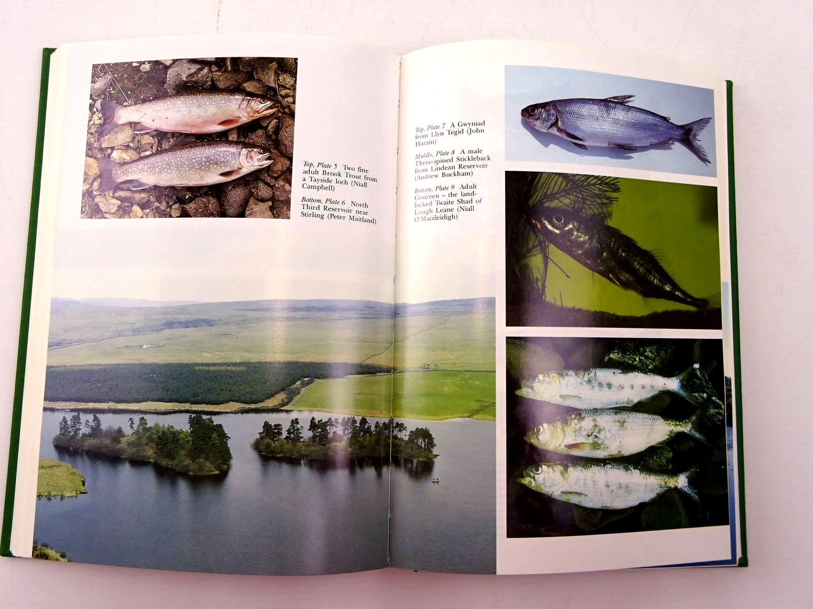 Photo of FRESHWATER FISHES OF THE BRITISH ISLES (NN 75) written by Maitland, Peter S. Campbell, R. Niall published by Collins (STOCK CODE: 2130650)  for sale by Stella & Rose's Books