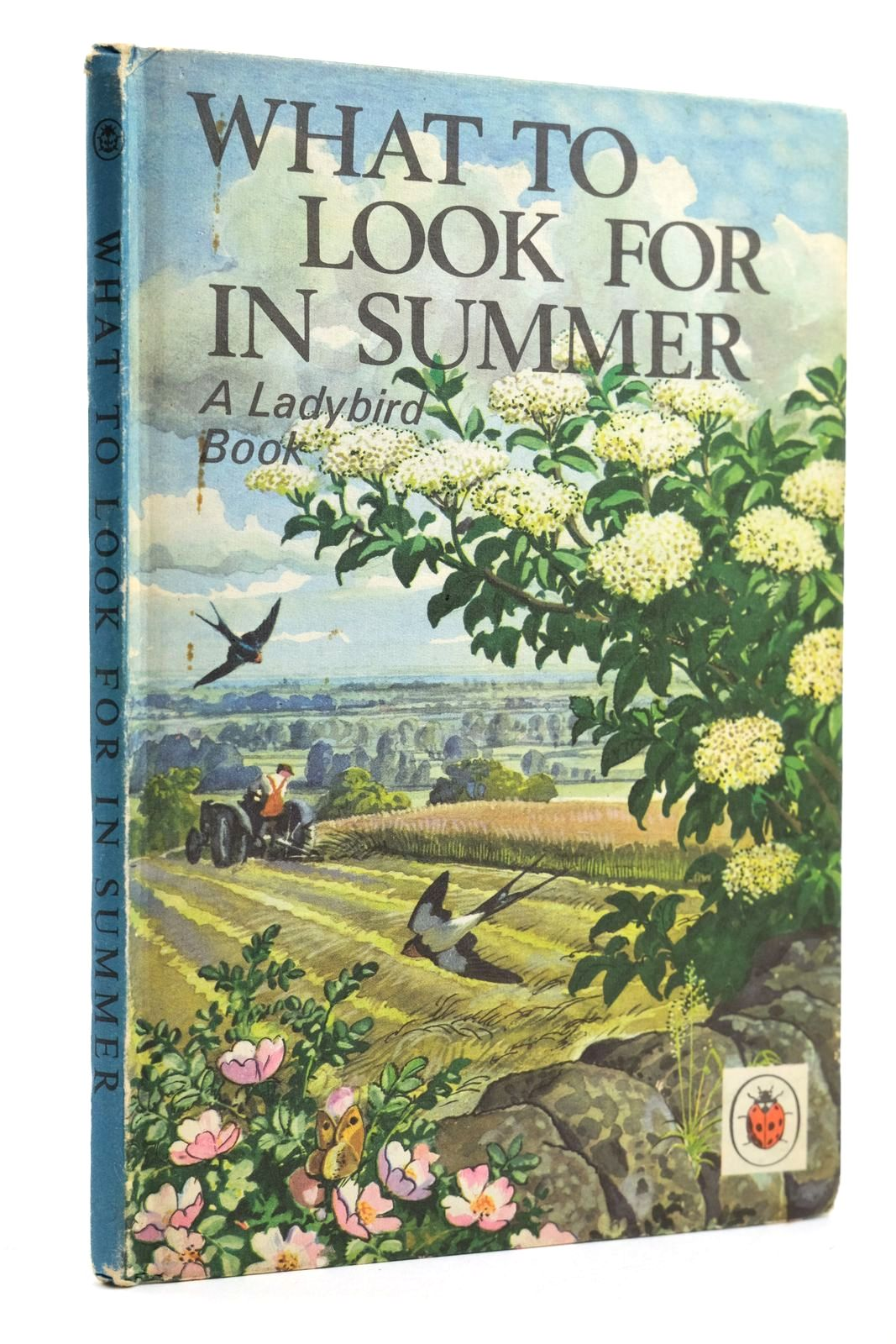 Photo of WHAT TO LOOK FOR IN SUMMER- Stock Number: 2131784