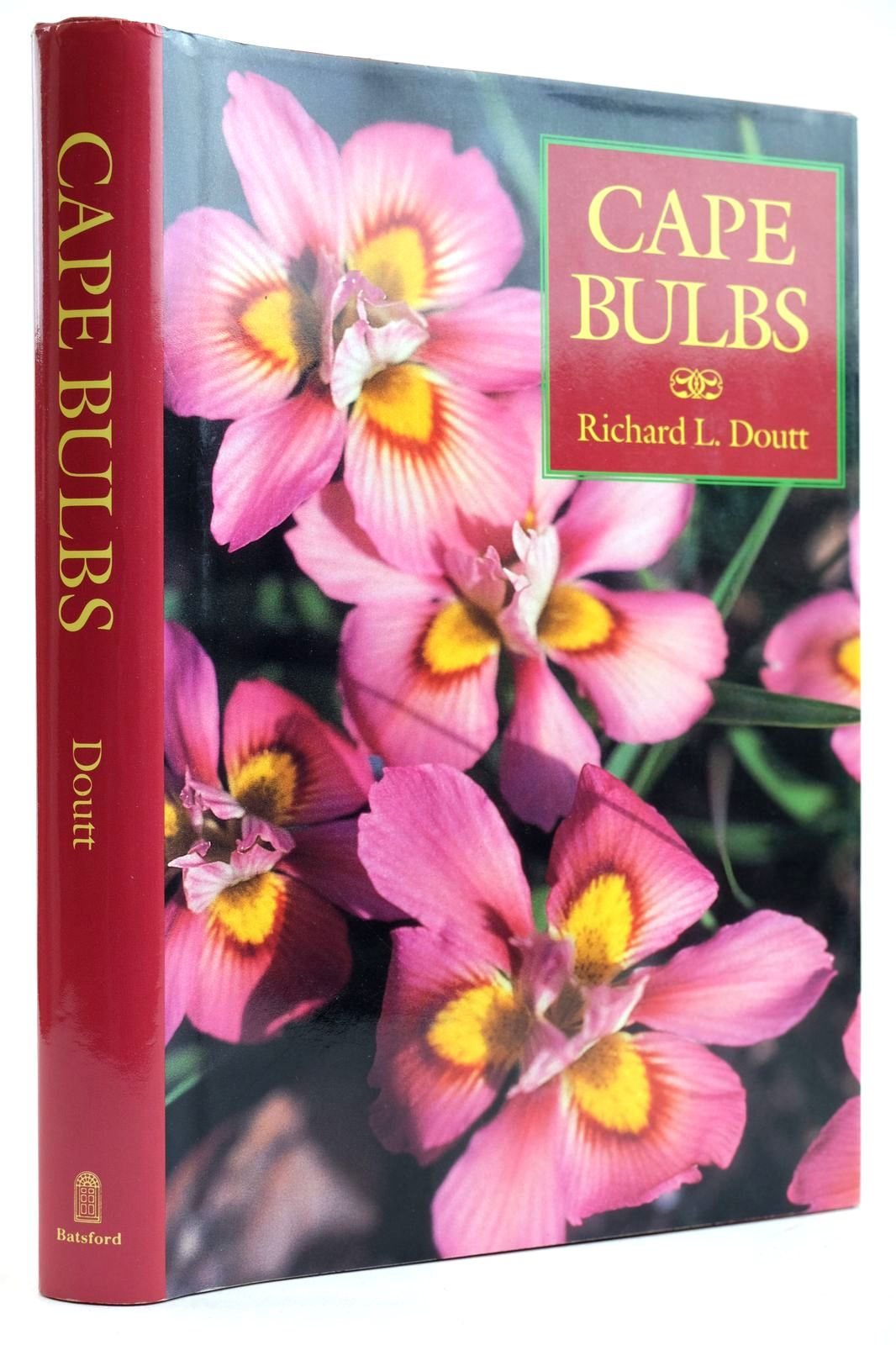 Photo of CAPE BULBS- Stock Number: 2132682