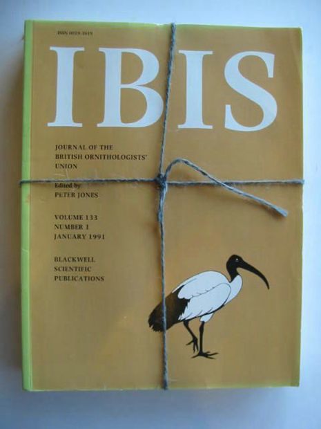 Photo of IBIS VOLUME 133 written by Jones, Peter published by British Ornithologists' union (STOCK CODE: 577248)  for sale by Stella & Rose's Books