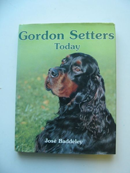 Photo of GORDON SETTERS TODAY- Stock Number: 597332
