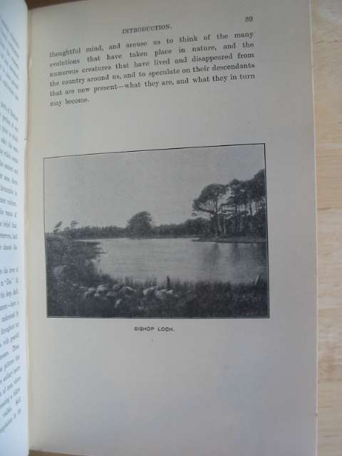 Photo of THE VERTEBRATE FAUNA OF DEE written by Sim, George published by D. Wyllie & Son (STOCK CODE: 672196)  for sale by Stella & Rose's Books