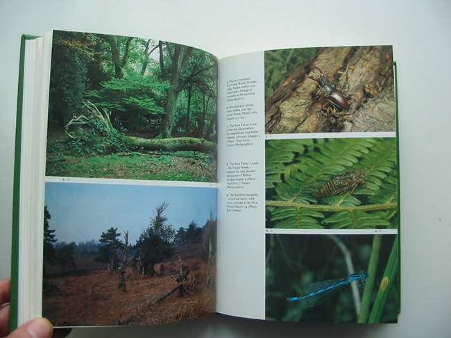 Photo of THE NEW FOREST (NN 73) written by Tubbs, Colin R. published by Collins (STOCK CODE: 820171)  for sale by Stella & Rose's Books